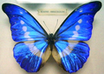 Bring Back the Butterflies to Bloomsbury