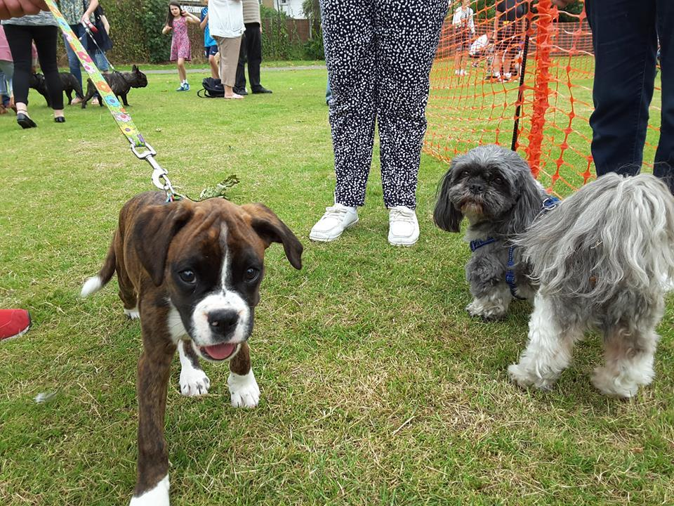 Dog Show at Murray Park Fun Day