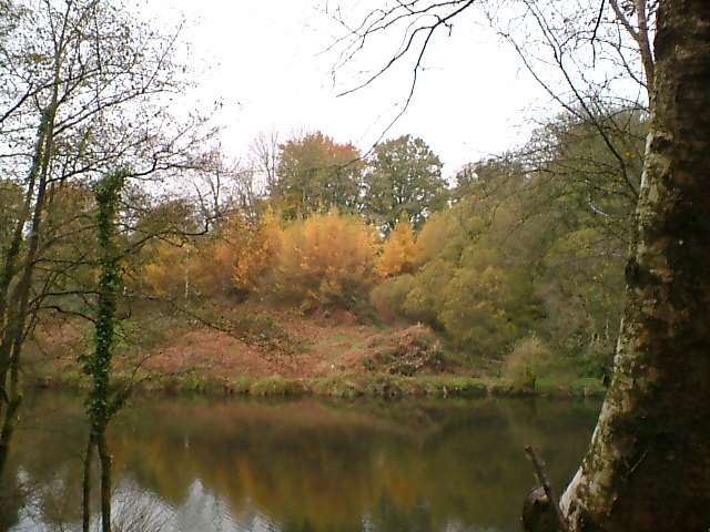 Otterhead Gold: Bracken and Larch Plantation across the Royston Lake November 2008