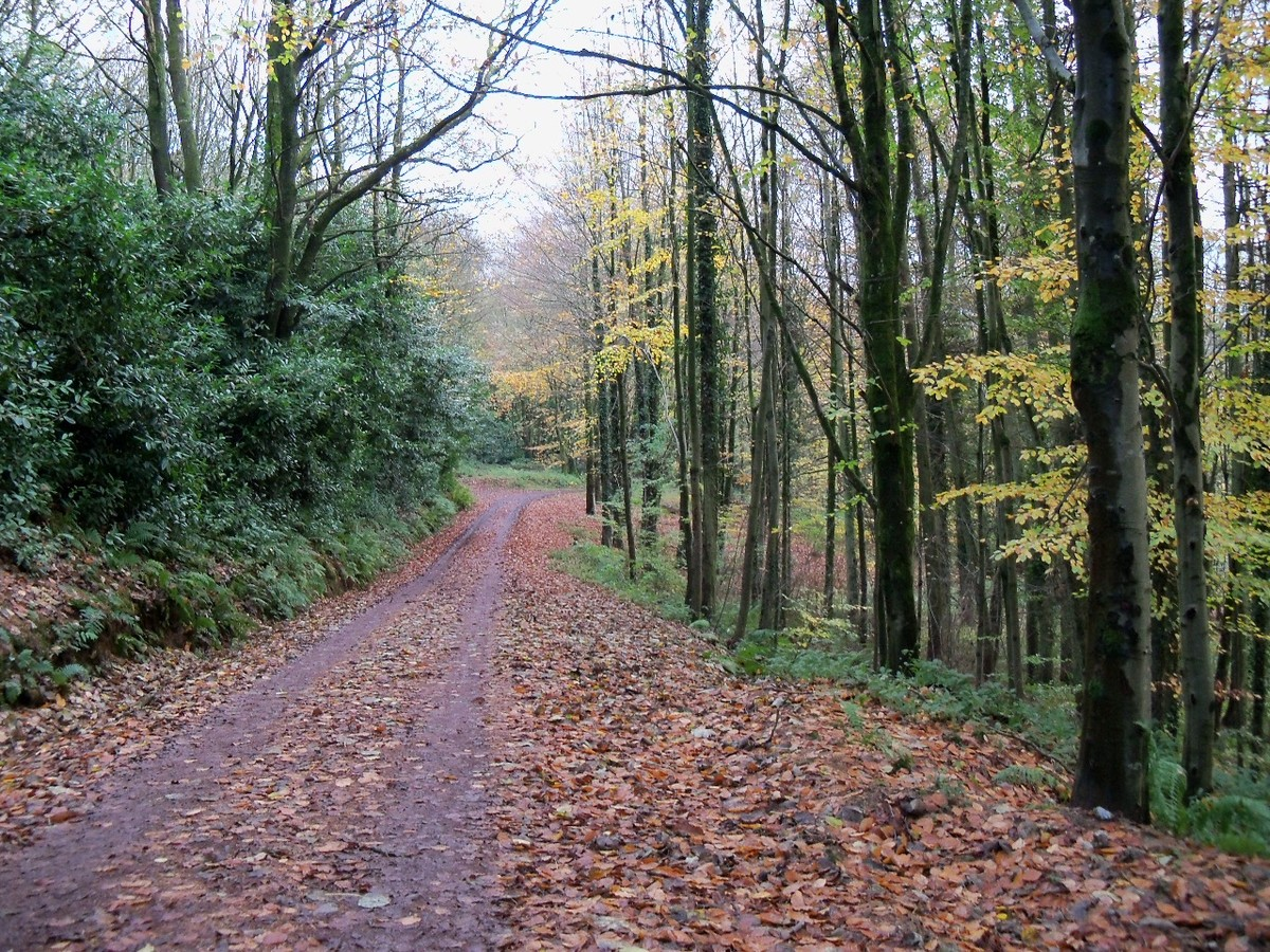 Down to the Lakes: the former drive to Otterhead House November 2011.