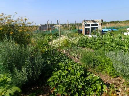 Trowan allotments 2014