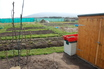 Some of the allotments growing things
